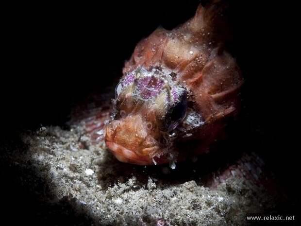 underwater_029