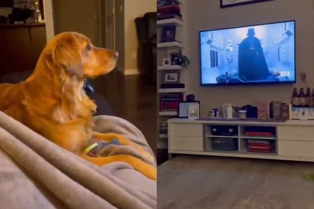 «Пора прятаться»: реакция пса нагероя из«Звездных войн» попала навидео