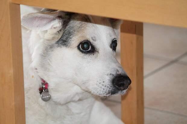 «Не думала, что с собакой так тяжело»: девушка с детства мечтала о собаке. А заведя её, через месяц чуть не сдала в приют