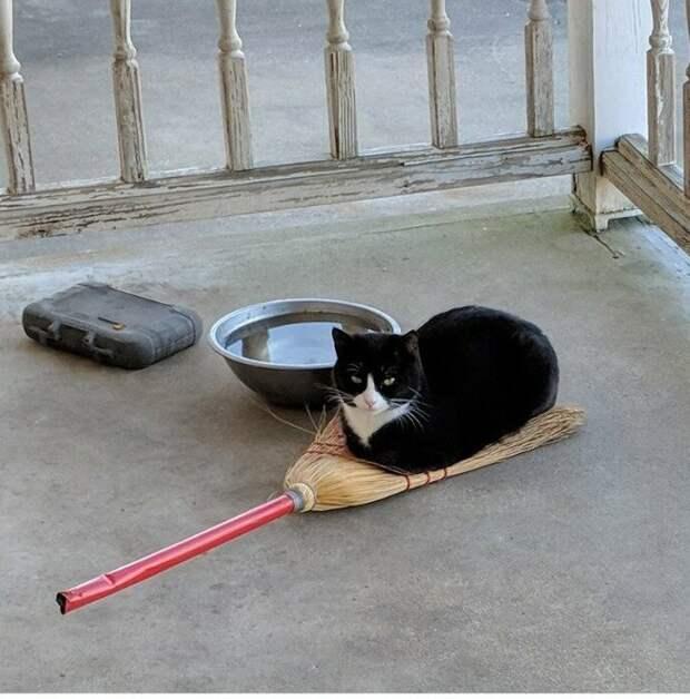 40 смешных фотоотчетов о кошках