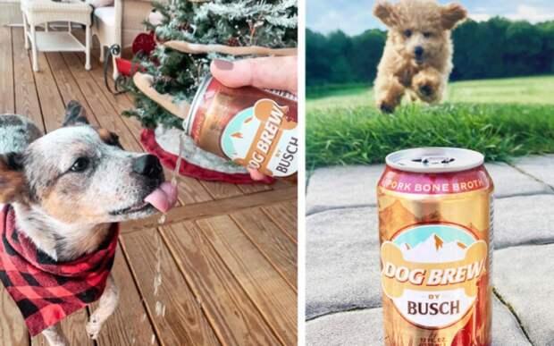 Компания сделала «пиво» для собак. Теперь она ищет хвостатых дегустаторов