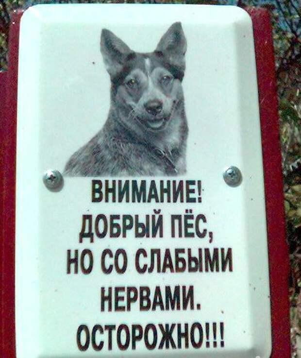 Когда хозяева сами боятся свою собаку животные, прикол