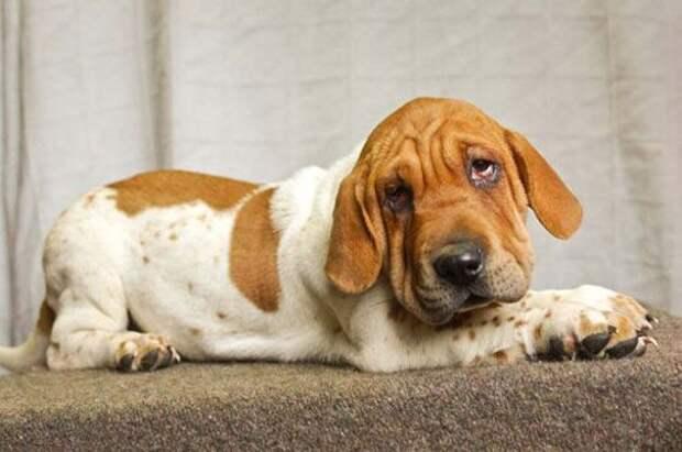 Когда у собак совершенно разных пород появляются щенята помесь, породы, собаки