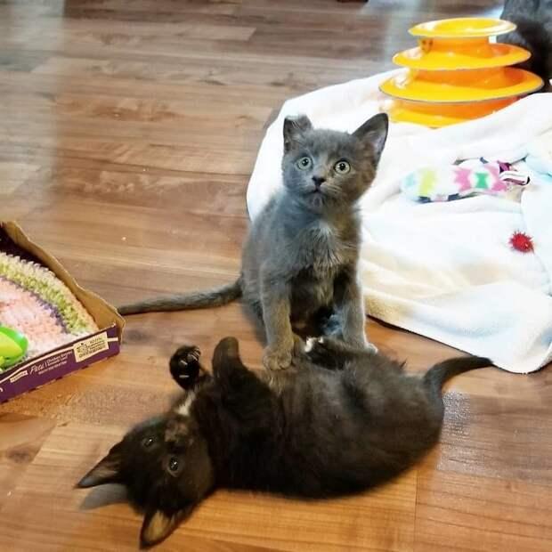Парализованный котёнок по кличке Овёс пошел на поправку, он снова начинает чувствовать лапки