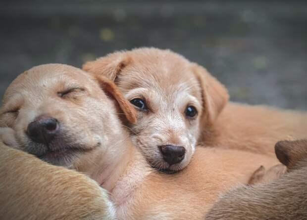 Удивительные случаи, когда животные спасали друг друга