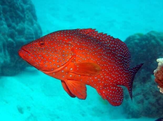 coral1-e1380734681471