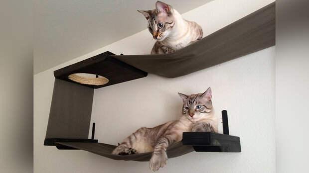 Кошка довольна и мебель цела: какую когтеточку выбрать