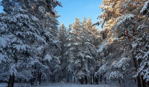 ВПермском крае лес сохраняют, используя современные технологии