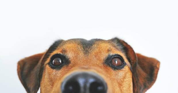 "Записки ветеринара. Кот-""пришелец"", кошко-мать и собака-улыбака"