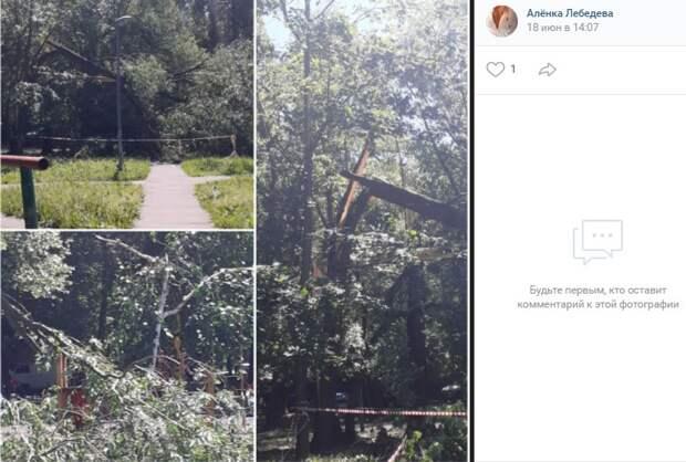 Сломанное дерево исчезнет с улицы Лавочкина до конца дня