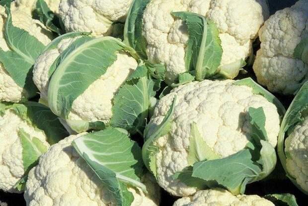 12 особенностей выращивания цветной капусты