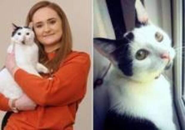 В Британии кот вернулся домой спустя три года