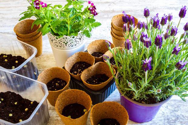 В феврале можно приступать к севу цветочных культур, отличающихся длительным периодом вегетации