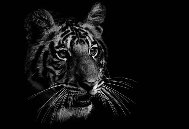 zhivotnye 13 Черно белые портреты диких животных