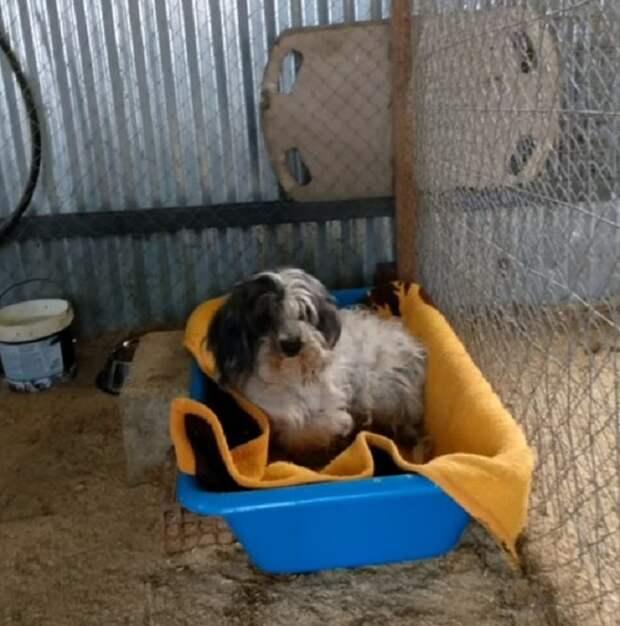 Она не была бездомной собакой. Хотя лучше быть без хозяев, чем с цепью на шее