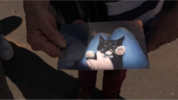 фото черного кота