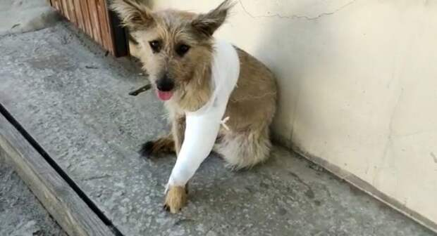 Мотя: маленькая собачка с больной лапкой лежала под авто