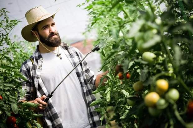 обработка томатов от вредителей по Лунному календарю 2019