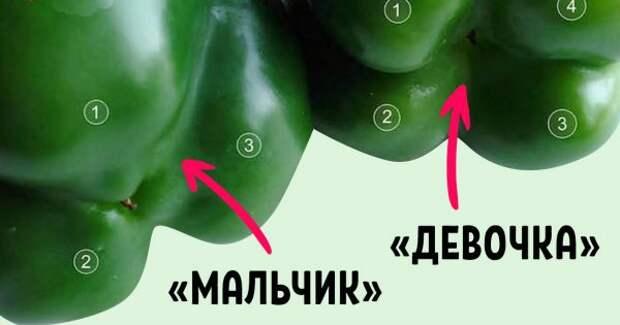 Покупай болгарский перец по этому признаку — и не прогадаешь. Совершенно разный вкус