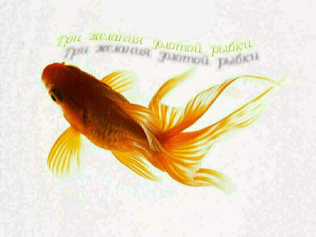 Три желания золотой рыбки. Часть 20