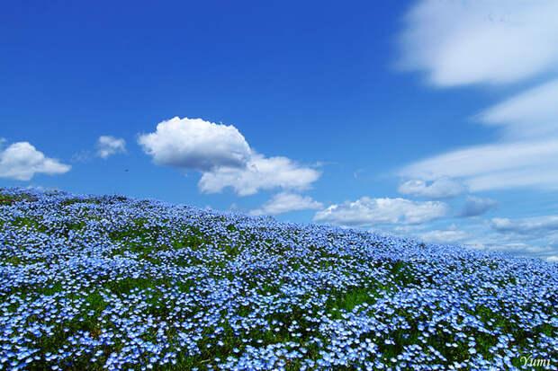 Небо слилось с землей (17 фото)