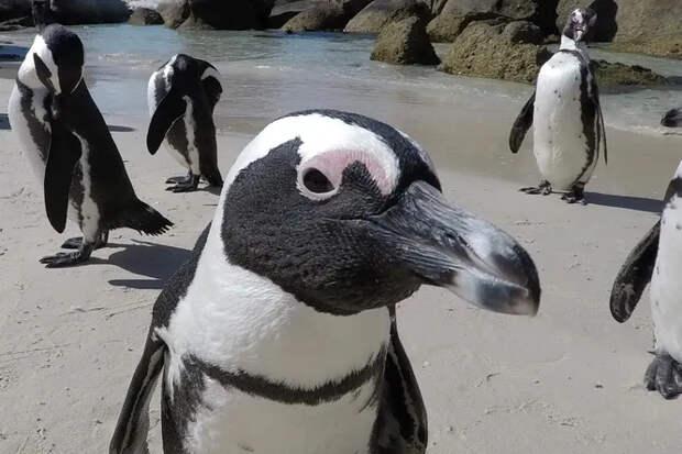 Почему пингвины живут в Антарктике, а белые медведи — в Арктике