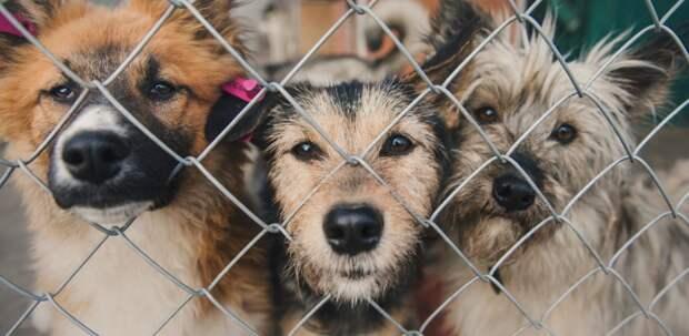 В районе Бирюлёво Западное появится приют для бездомных животных
