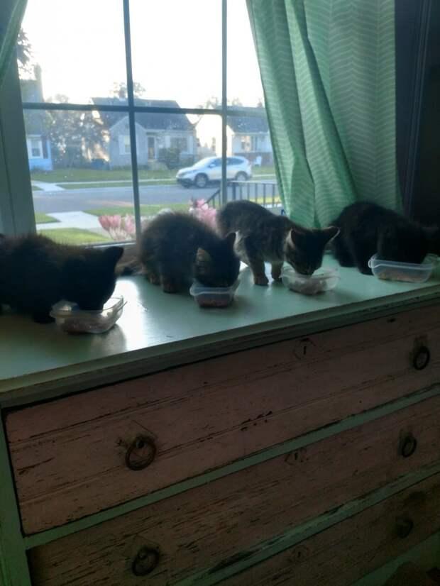 четыре котенка кушают