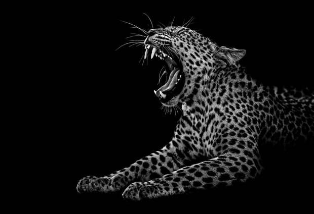 zhivotnye 6 Черно белые портреты диких животных
