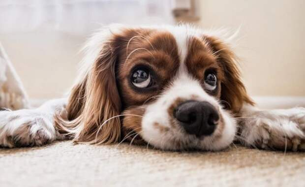 В Москве прививки от бешенства собакам и кошкам сделают на дому Фото с сайта pixabay.com