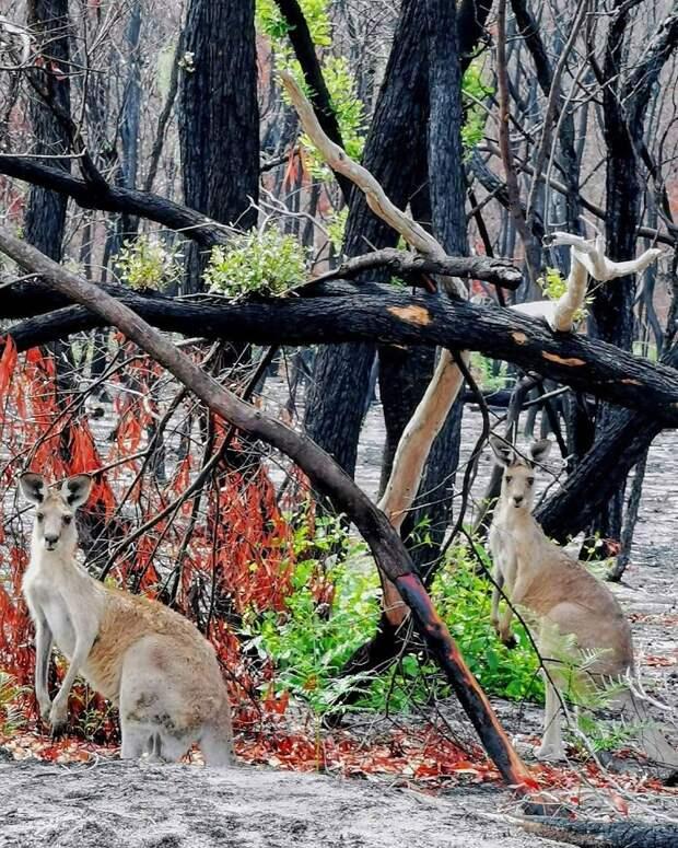 10 обнадеживающих фото, как в Австралии зарождается новая жизнь после пожаров