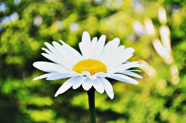 Цветы/ Фото pxhere.com