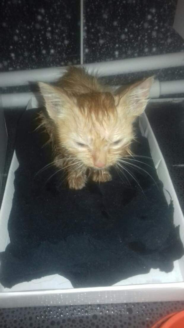 Котёнок сидел на асфальте, еле слышно мяукал и дрожал от холода