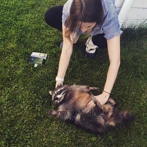Каждое фото этого домашнего енота можно разбирать на мемы instagram, домашний енот, енот