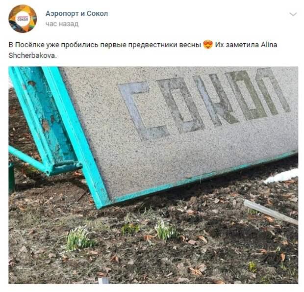 Фото дня: предвестники весны показались в поселке Художников