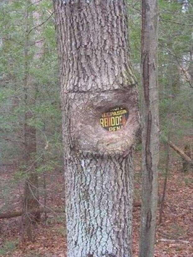 25 деревьев, которые медленно «заглатывают» цивилизацию (26 фото)