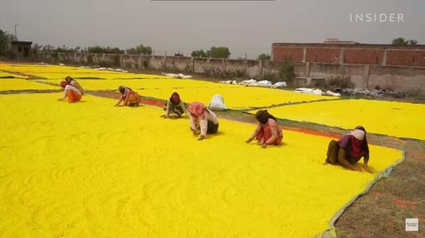 Зачем в Индии производят 2000 тонн цветных порошков целый год, а высыпают их за день