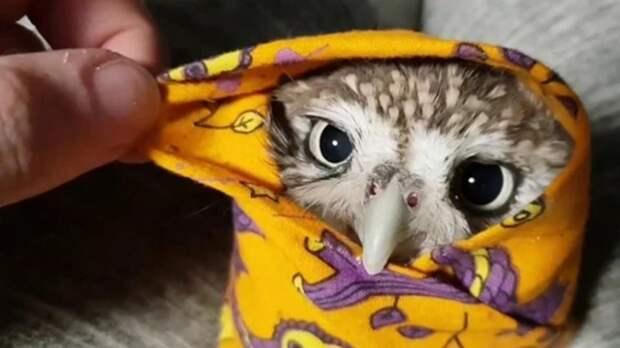 Фото завернутых в одеяла спасенных сов растрогали Сеть