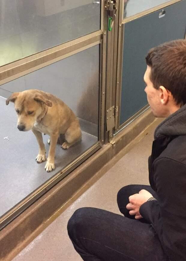 Собака из приюта  приют, собака, фото