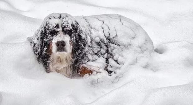 Пес спас ребенка, оказавшегося в снегу