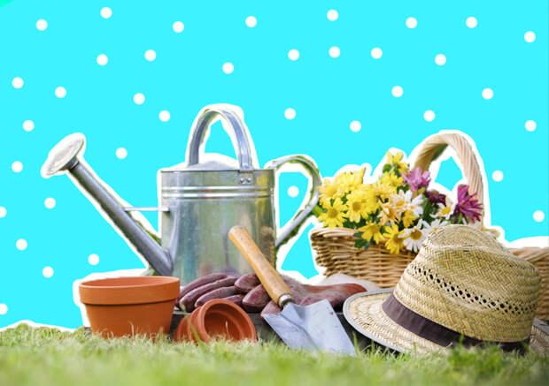 Уход за садом весной: как подготовиться к дачному сезону