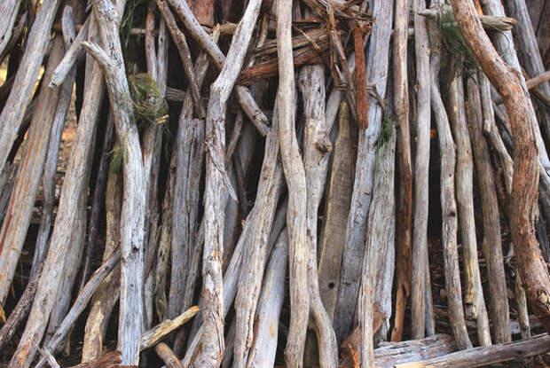 Необыкновенное преображение обыкновенного дерева