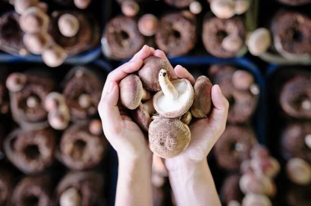 Скорая помощь при отравлении грибами