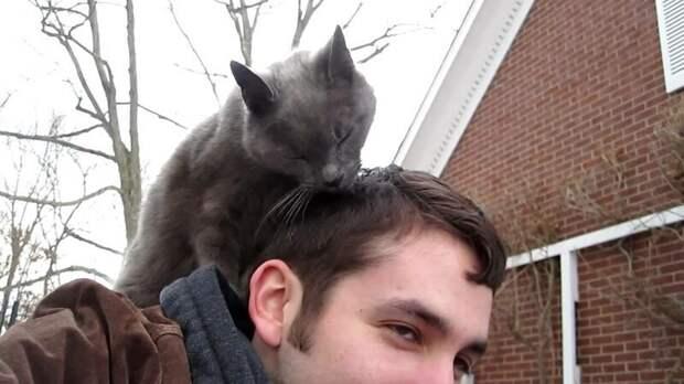 Почему кошки лижут хозяевам волосы? внимание, забота, запах, запрет, кошка, лизание, почемучка, привычка