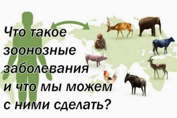 Что такое зоонозные заболевания и что мы можем с ними сделать?