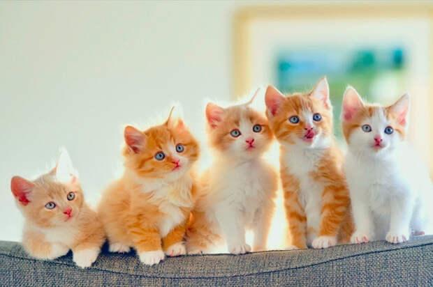 «Кота заводят, чтобы…»: Душевное стихотворение-посвящение всем котам и их хозяевам