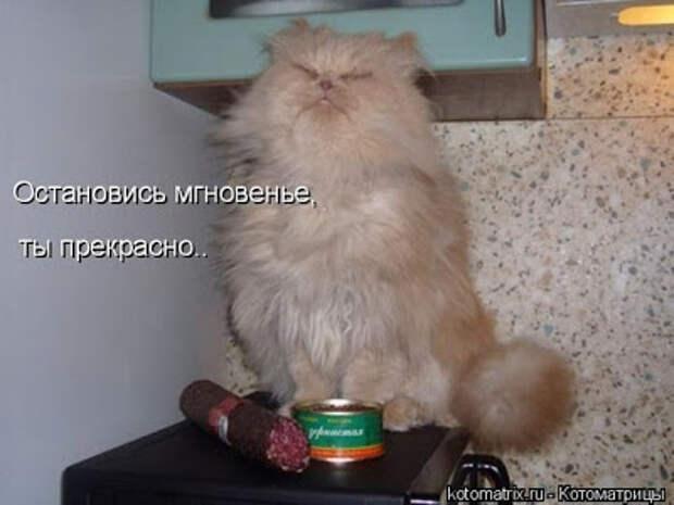 Про кота Горюшу