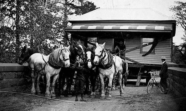 Как раньше переезжали с помощью лошадей