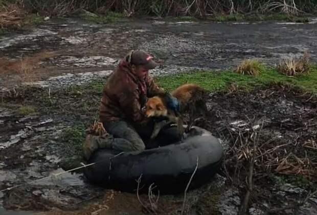 Мужчина спас собаку, застрявшую на болоте (1 фото + 1 видео)