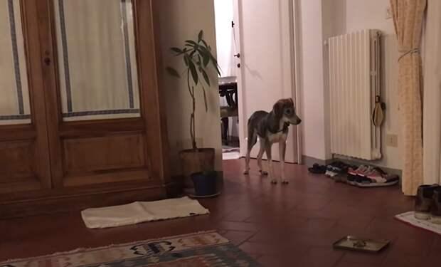 Собаку взяли из приюта и она залезла под диван. Люди стали снимать на видео, как меняется поведение